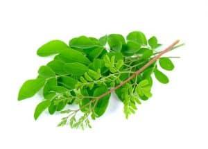 Moringa gegen Bluthochdruck
