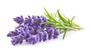 Lavendel gegen Bluthochdruck
